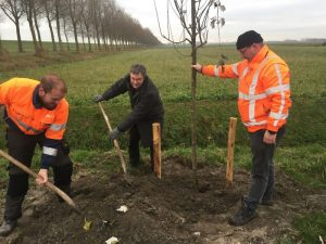 Wethouder Theo Groot plant samen met projectleider Jitze Bosscha (Frisia Bergum) en projectleider Stefan Louwerse (gemeente Hollands Kroon) de eerste boom aan het Wagenpad. Foto: Hollands Kroon.